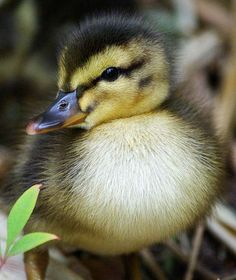 Image detail for -Cute Animals : Cutest Baby Animals | Animal Danger