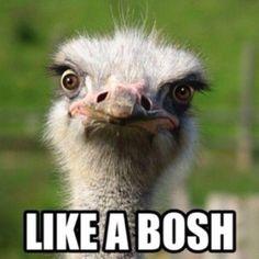 Like a Bosh!