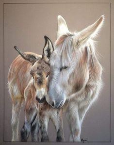 Portraits d& dessin pastel - Almost true / Dogs Cats Horses etc Baby Donkey, Cute Donkey, Farm Animals, Animals And Pets, Cute Animals, Animal Paintings, Animal Drawings, Beautiful Horses, Animals Beautiful