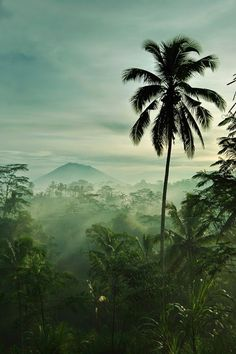 (Bali).  We should decide on a geographical location / setting to provide a sense of realism to the forest cover.  The combination of lighting, dense tropical foliage and fog in areas like Indonesia provides a lot of flexibility.