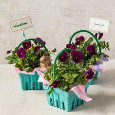 Easter Carton Plante