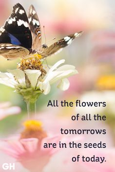 Beautiful Spring Quotes for the Year's Best Season Are you planting flower seeds or invasive specie seedsAre you planting flower seeds or invasive specie seeds Planting Flowers From Seeds, Flower Seeds, Seed Quotes, Fresh Quotes, Spring Quotes, Plants Quotes, End Of Winter, Uplifting Quotes, Say Hello