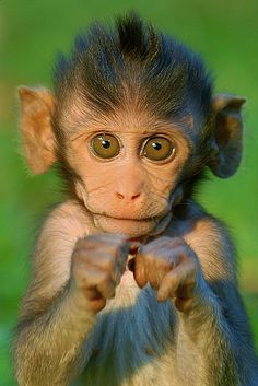 Baby Baboon.  Do you need a hug?