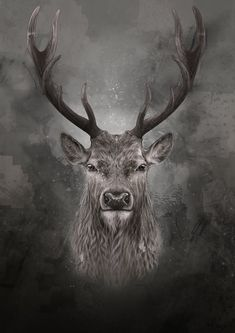 Moose Tattoo, Hirsch Tattoo, Portrait Art, Tattoo Ideas, Moose Art, Tattoos, Cover Pages, Blue Prints, Hipster Stuff