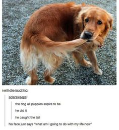funny animal tumblr posts 11.jpg
