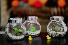 Three little terrariums