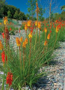 Plants Drought Resistant San Go Mix Of Native And Tolerant Minimizes Maintenance At Landscaping Ideas Pinterest