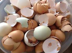 Skořápky od vajíček můžeme dát jako spodní vrstvu do květináče
