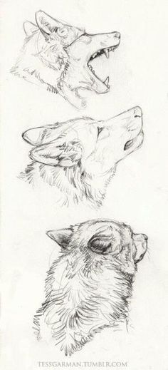 Wolf pencil drawing by jerry