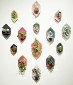 graphic cacti