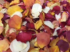 Easy Fall Treats and other Crafty Gems: Cute Fall Cupcake and Easy Bake Sale Packaging Real Rose Petals, Dried Rose Petals, Flower Petals, Flowers, Burnt Orange, Flower Farmer, Wedding Confetti, Rose Petal Confetti, Flower Decorations