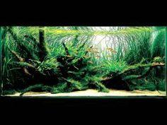 Aqua Design Amano India (ADA)- Nature Aquarium