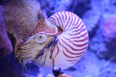 awesome shell