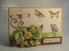 nature walk butterflies