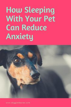 Did you know that sleeping with your dog can help reduce their anxiety? Here's the details on how sleeping with your dog can be a very good thing art breeds cutest funny training bilder lustig welpen Training Your Puppy, Dog Training Tips, Dog Minding, Dog Training Techniques, Dog Anxiety, Dog Care Tips, Pet Care, Angst, Dog Behavior