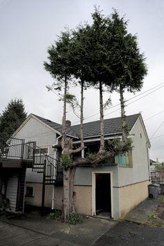 20 Bäume, die sich ihr Leben nicht nehmen lassen.