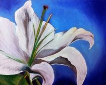 A visual display of paint works by Canadian artist Cheryl Todd Shergold. Residing in Crossfield, Alberta - Cheryl paints in oils, acrylics and watercolor. White Lilly, Visual Display, Canvas Board, Canadian Artists, Cheryl, Oil, Watercolor, Artwork, Painting