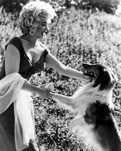 Marilyn Monroe #dog #Lassie #Collie My dog Sam is a collie and he likes to shake hands too!