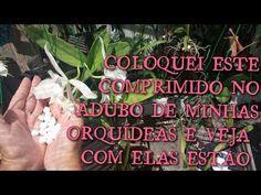 UM COMPRIMIDO QUE FAZ AS ORQUÍDEAS FLORIR, ENRAÍZAR MUITO RÁPIDO ....!!! - YouTube