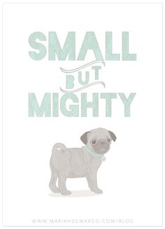 small but mighty pug