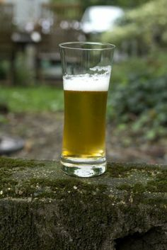 Some thoughts on the best use of beer in the garden - using it as fertilizer may be a myth, but it's still a tried and true slug deterrent.