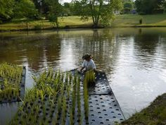 A Floating Wetland Handbook For San Francisco 39 S Southeast Waterfront Pinterest Landscaping