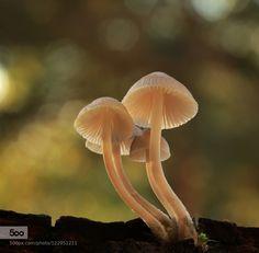 Mushrooms by Photonatur. Please Like http://fb.me/go4photos and Follow @go4fotos Thank You. :-)