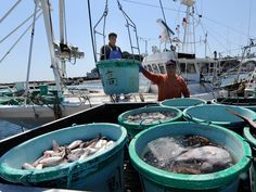 Radiation still high in fish near Fukushima