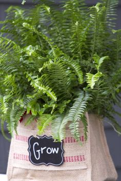 When To Feed Fern Houseplants: What's The Best Fertilizer For Indoor Ferns