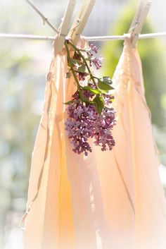 lilacs instead of dryer sheets!! what a pretty picture & fantastic idea! i <3 it!