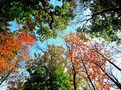 October tree's