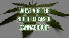 Cannabidiol Side Effects What Are the Side Effects of CBD