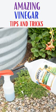 Learn how you can use vinegar for more than just cooking. Use it both outside and inside to clean and even kill weeds in your drive way.#easycleaning#cleaninghacks#householdhacks#cleaningtips#householdtips Diy Home Cleaning, Household Cleaning Tips, Cleaning Hacks, Kill Weeds Naturally, How To Clean Silverware, How To Wash Vegetables, Diy Projects Plans, Vinegar Uses, Apple Cider Benefits