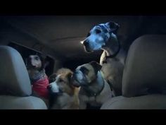 Funny Dog Commercial - Dogs Camping | Subaru