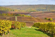 Champagne Tour from Paris: Moet and Chandon, Hautvillers and the House of Mumm - Paris | Viator