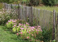 Easy methods to set up a ganivelle fence within the backyard British Garden, Garden Pictures, Outdoor Walls, Geraniums, Trees To Plant, Garden Furniture, Beautiful Gardens, Outdoor Gardens, Fence