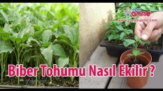Garden Inspiration, Flower Arrangements, Herbs, Flowers Garden, Floral Arrangements, Herb, Floral Arrangement, Center Pieces, Spice