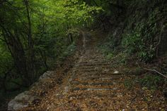 Calà del Sasso - Valstagna, Sasso di Asiago - Valsugana, Val Frenzela, Altopiano