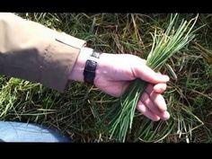Reconnaître la ciboulette sauvage (ciboule) - YouTube