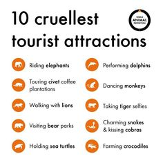 The rising popularity of animal selfies is leading to irresponsible behavior that contributes to wildlife exploitation and animal abuse worldwide. Civet Coffee, Selfies, World Animal Protection, Elephant Ride, Responsible Travel, Animal Faces, Animals Of The World, Animal Rights, Attraction