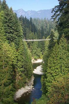 Capilano Suspension Bridge Park – Vancouver, Canada. Everyone should go here, it was awesome :)