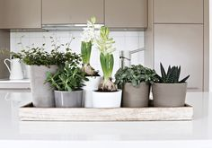 Mini garden to cover the sink. Planter Pots, Sink, Cover, Garden, Kitchen, House, Sink Tops, Vessel Sink, Garten