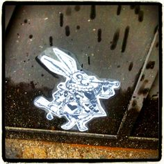 Please follow the white rabbit #bunnycrew