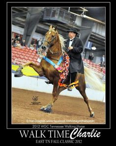 """2012 World Grand Champion Tennessee Walking Horse """"WALK TIME CHARLIE""""  This is one beautiful and talented animal!"""