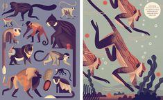 Mad about Monkeys - Owen Davey Illustration