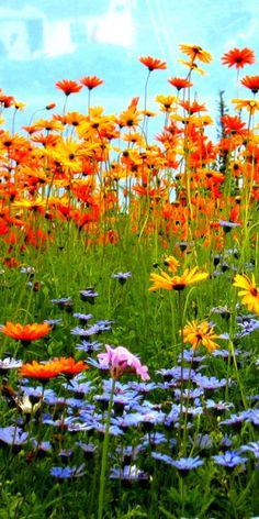 """Let a hundred flowers bloom."" Mao Zedong"