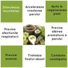 Macerat de aloe vera si miere: Vindeca miraculos si creste imunitatea Forever Aloe, Healthy, Plants, Plant, Health, Planting