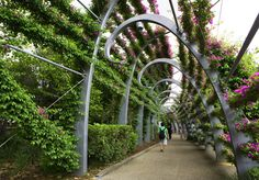 Southbank Arbour - Greening System - Ronstan Tensile Architecture