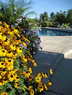 The garden next to the pool could use some TLC - maybe some perennials like this?
