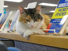 Addison Nash  University of Science and Arts of Oklahoma library cat Addison Nash performs the usual tasks of napping and greeting, but she also raises money for pet-adoption society Friends with Four Paws. Like the university's students, Addison breaks during the summer and fall, occupying her time updating Facebook.